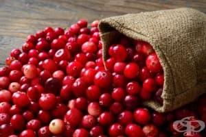 Червената боровинка е изключително средство срещу пикочни инфекции