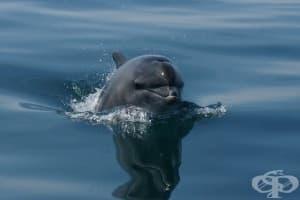 Високи нива на живак и замърсители са открити в делфините, обитаващи Ламанша
