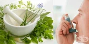 Пет билки, които облекчават пристъпите на астма