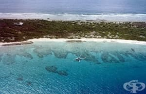 Морският живот и популацията на атола Бикини процъфтява, въпреки атомните бомби