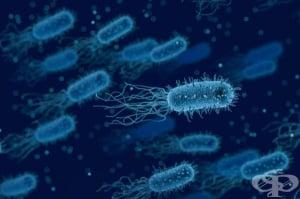 Учени установиха, че ACE инхибиторите намаляват имунния отговор при бактериални инфекции