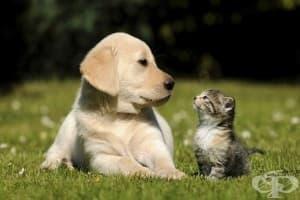 Учени обявиха, че кучетата са по-умни от котките