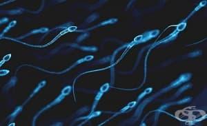 Хормонален контрацептив за мъже е новото средство срещу забременяване