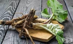 Коренът от репей е мощно противовъзпалително средство и помага за загуба на тегло