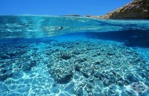 Днес отбелязваме Световния ден на океана