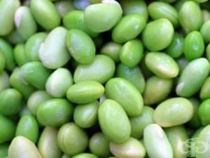 Зелен боб едамаме