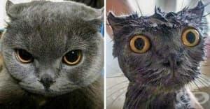 20 смешни снимки на животни преди и след баня