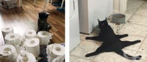 20 смешни снимки на котки, които доказват, че тези животни са пълни с изненади