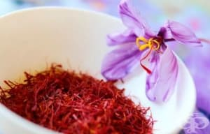 Историята на шафрана като лечебно средство - от древността до наши дни