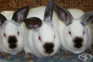 Как жена успява да излъже лекарите, че е родила зайци
