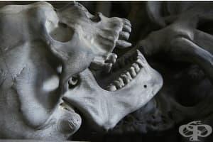 """""""Вампирско погребение"""" в римско гробище за покосени от малария деца"""