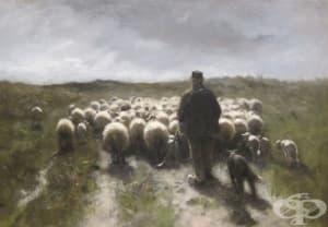 Как през 17-ти век в Англия се опитват да създадат човек-овца чрез кръвопреливане