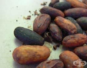 Лечебни употреби на какаото в древна Мезоамерика