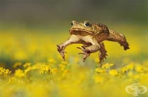 Монахът лечител, който обичал да яде жаби