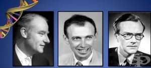 Франсис Крик и изследванията му в областта на генетиката: Нобелова награда, хипотеза за последователността и централната догма