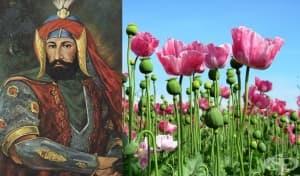 Упойващите вещества в ислямския свят – част 2