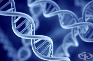 Съществува ли реално клонираното дете Ева