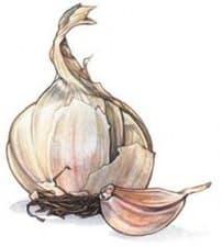 Употреба на чесъна в традиционната китайска медицина