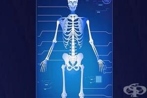 Как да храним костите