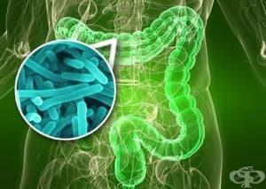 Чревна микрофлора, пробиотици, пребиотици, антибиотици – как действат те