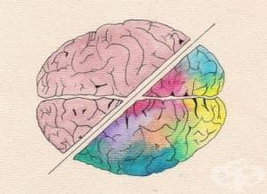 Гимнастика за мозъка — забавен тест + отговори