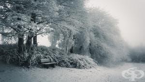 14 невероятни зимни снимки и няколко цитата, които да сгреят душите ни
