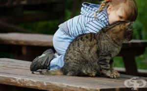 25 добри причини, поради които всички ние се нуждаем от котка в живота си! (2 част)