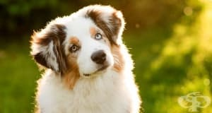 Кучетата не обичат да им говорите като на бебета