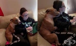 Жена осиновила питбул и той не може да спре да я прегръща