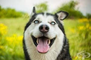 Учените твърдят, че сърцето на вашето куче бие в синхрон с вашето