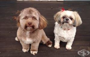 Йоги – кучето с човешко лице, което стана хит в социалните мрежи
