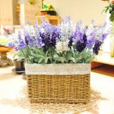 Каква енергия ни носят цветята у дома?
