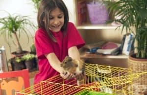 12 важни грешки, които съкращават живота на домашните любимци