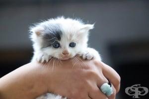 Изненадващо, но факт - какво не знаем за котките