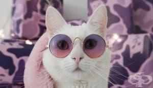 Заппа – котката със собствен марков гардероб, която ще ви очарова