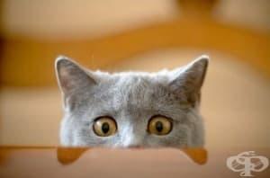 12-те най-типични черти на всички котки