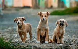Бездомните кучета от Чернобил с нов шанс за дом в САЩ