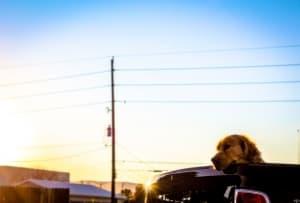 Куче, заключено в кола през лятото: какво да направите