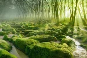 12 от най-приказните и тайнствени гори в света – I част