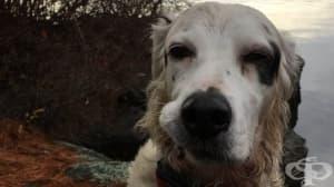 Смело куче спасява собственика и другарите си от нападение на мечка