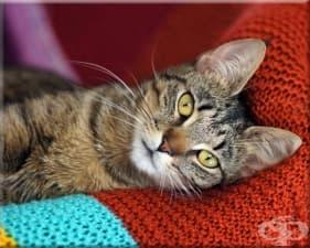 5 съвета за отглеждане на приятелски настроена котка