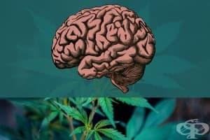 Пушенето на трева застарява мозъка с до 3 години