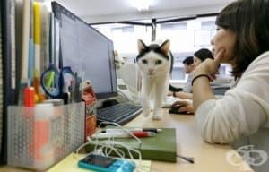 Японска компания приема котки, за да понижи стреса на работното място