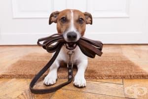 Вредни неща, които правите с кучето си, без да го осъзнавате
