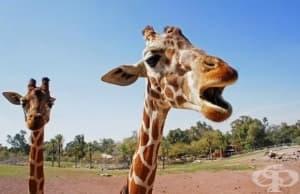 Странни факти за животните, които ще ви натъжат - част 1