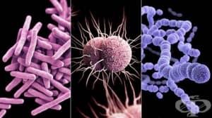 Микробиологична характеристика на инфекциите по системи