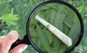 В област Смолян пада сериозно възрастовата граница на употребяващите наркотици