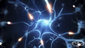 Учени създадоха по изкуствен път мозъчна клетка от кожна