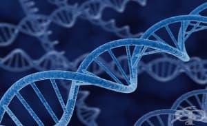 Голяма част от нашата ДНК не се използва