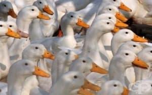 Две огнища на птичи грип в Хасковско